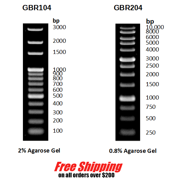 Dna Ladder 100 Bp 1kb Marker For Agarose Gel