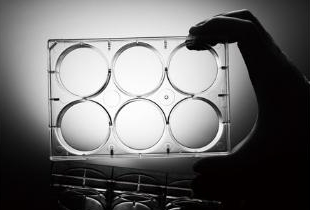 6-well-tissue-cell-culture-plate-clear-lid-flat-bottom