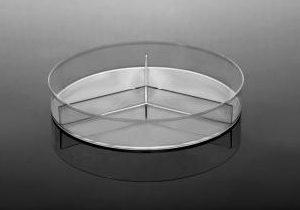 Y-plate-petri-dish-LB-nutrient-agar