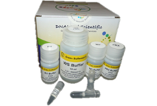 plant-total-RNA-Isolation-mini-prep-kit-Qiagen