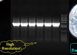 high-pure-quick-dissolve-agarose-gel-dna-gel-low-eeo