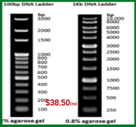 dna-ladder-marker