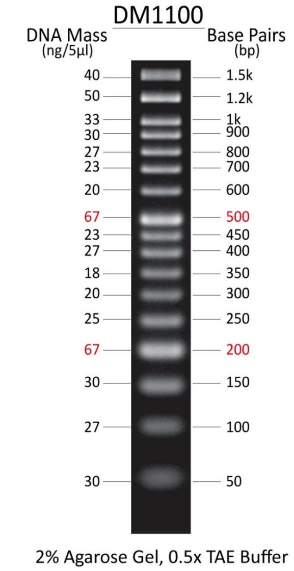 Excelband 50 Bp Dna Ladder Smobio Dm1100 Dna Marker