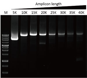 SMOBIO-Q-HiFi-DNA-polymerase-TF200