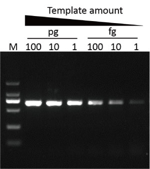 TF2000-Q-HiFi-DNA-Polymerase