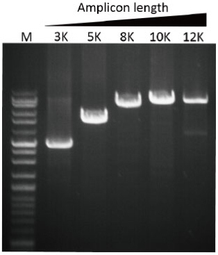SMOBIO-Taq-DNA-Polymerase-TK1000