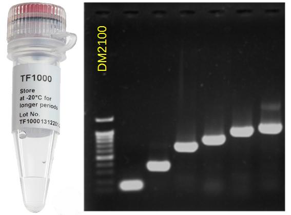 SMOBIO-High-Fidelity-DNA-Polymerase