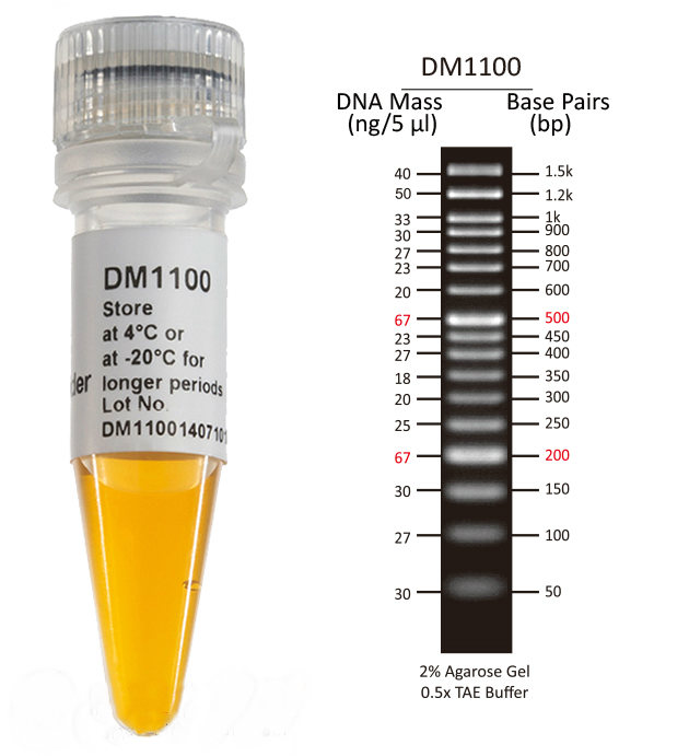SMOBIO-50-bp-DNA-Marker-DNA-Ladder