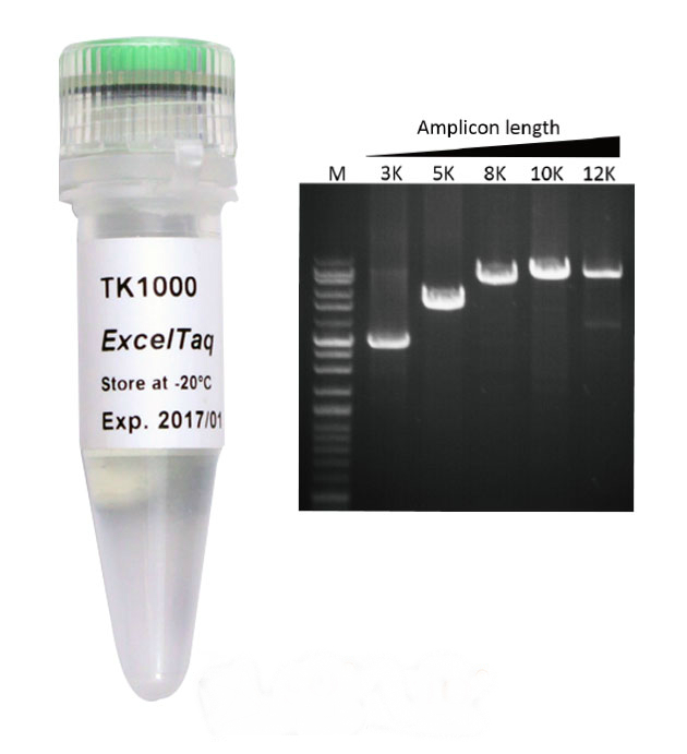 TK1000-Taq-DNA-Polymerase-Mouse-genotyping