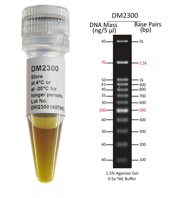 100-bp-DNA-Ladder