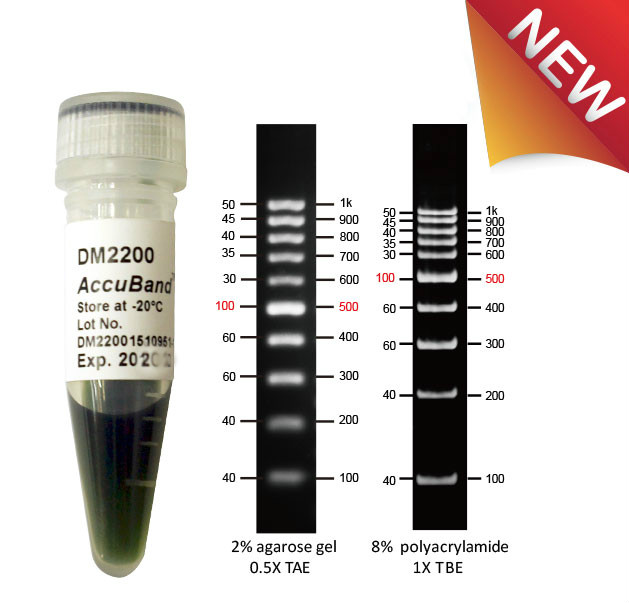 100-bp-DNA-marker-II-accuband-dm2200