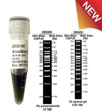 100-bp-DNA-marker