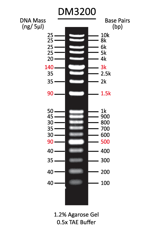 1Kb-DNA-ladder-plus-DNA-marker
