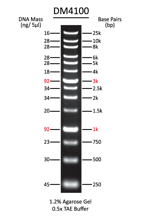 25Kb-DNA-ladder-broad-range