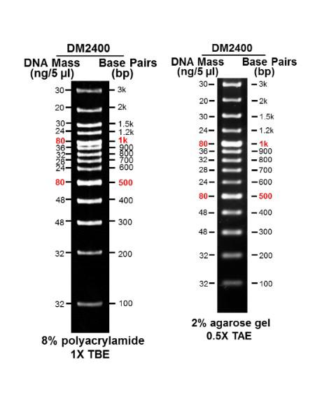 100bp-DNA-marker