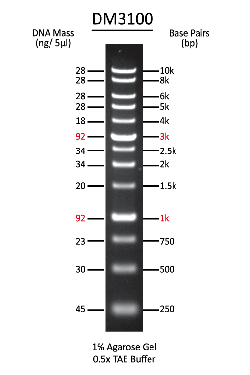 1-Kb-DNA-ladder
