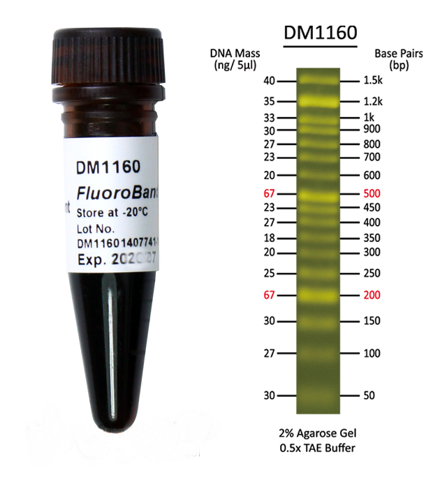 Fluorescent-DNA-ladder-50bp-DNA-marker-DM1160