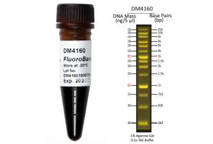 broad-range-fluorescent-dna-marker