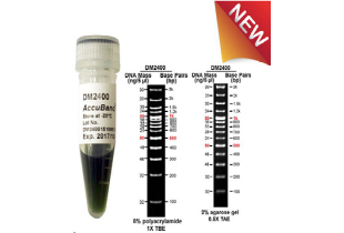 100bp-DNA-ladder