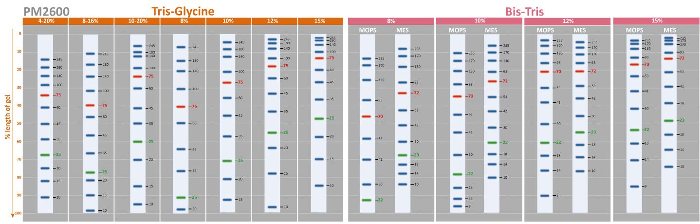 prestained-protein-ladder-PM2600