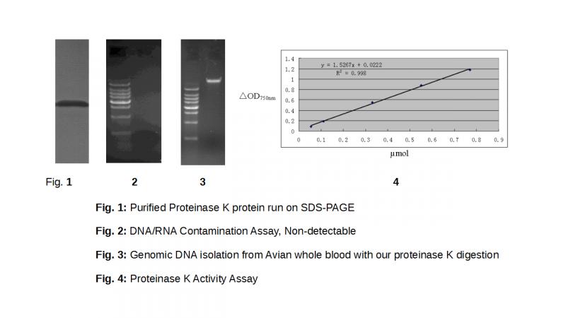cheap-proteinase-k