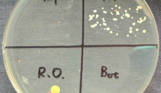 pre made nutrient agar plates